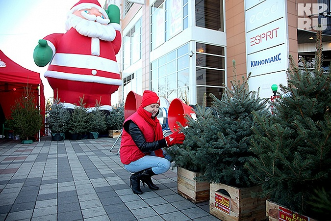 Christmas Trees Bazaars to Open in Kuban