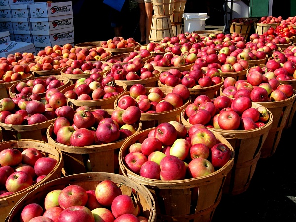 Locally Grown Apples Can't Enter Market, Complain Gardeners